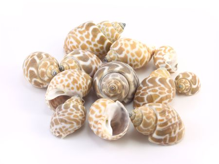 a scattering of seashells on a white backgroun Stock Photo - 5677455