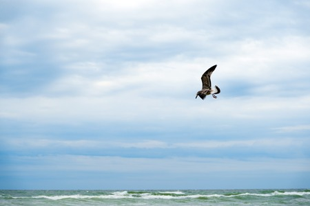 Albatross flying over dark rainy clouds and stormy sea