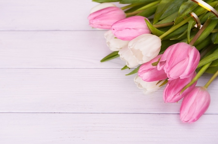 hearts day: Close view at white and pink tulips with gold ribbon on a white wooden background lying on a right corner with a lot of copy space. Stock Photo