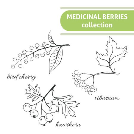 medicate: Medicinal berry collection. Bird cherry, blackthorn, viburnum, sea-buckthorn, blackcurrant, rose hip, nightshade, barberries, hawthorn. Health and nature set.