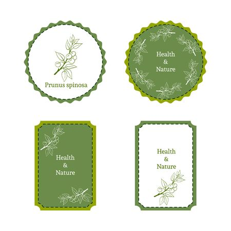 uncultivated: Handdrawn vector illustration blackthorn - Prunus spinosa. Medicinal berry.For traditional medicine, gardening or cooking design, package, wrapper, label. Illustration