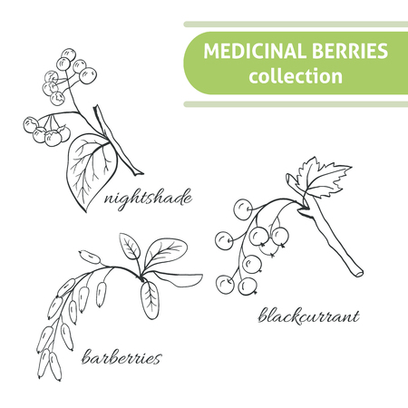 uncultivated: Medicinal berry collection. Bird cherry, blackthorn, viburnum, sea-buckthorn, blackcurrant, rose hip, nightshade, barberries, hawthorn. Health and nature set.