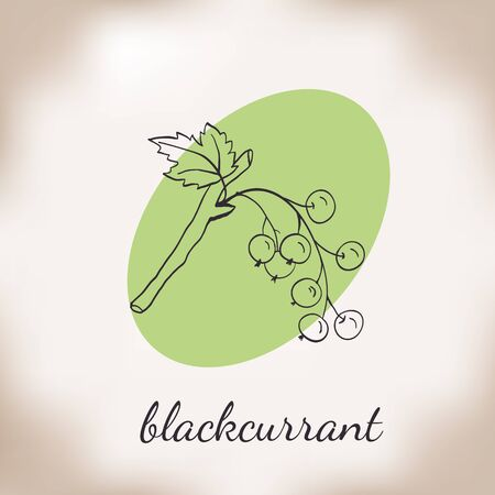homeopathic: Handdrawn vector illustration blackcurrant. Medicinal berry.For traditional medicine, gardening or cooking design, package, wrapper, label. Illustration