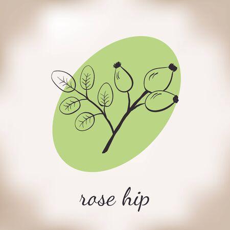 medicate: Handdrawn vector illustration rose hip. Medicinal berry.For traditional medicine, gardening or cooking design, package, wrapper, label. Illustration