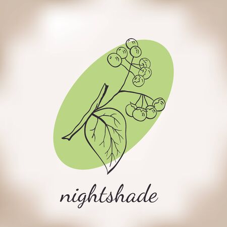 uncultivated: Handdrawn vector illustration nightshade. Medicinal berry.For traditional medicine, gardening or cooking design, package, wrapper, label.