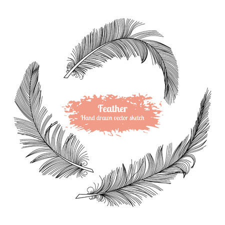 Hand drawn vector set feather sketch style.  Illustration