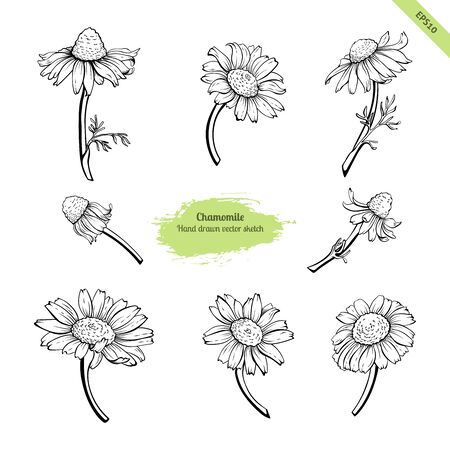 Hand drawn chamomile flower collection. Black line botanical drawing.Floral set for medicine and cosmetic package design. Coloring book element. Иллюстрация