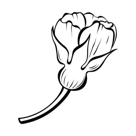 Dog rose flower sketch style. Black line botanical drawing. Decorative floral element for your design