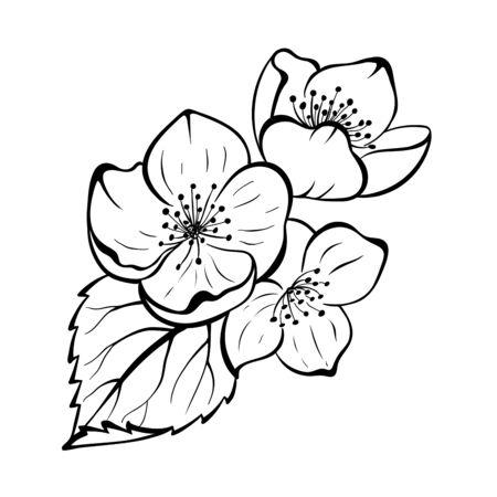 Hand drawnJasmine flower with leaves. Black line botanical drawing. Decarative floral sketch for your design Иллюстрация