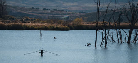 lagoon with submerged electric poles with birds flying over it Stock fotó