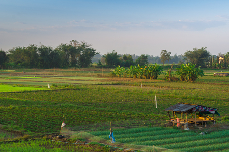 Beautiful Green Rice Field in Chiang Mai, Thailand