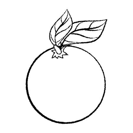 Boceto Dibujado Mano De Mango Aislado, Ilustración Vectorial Blanco ...