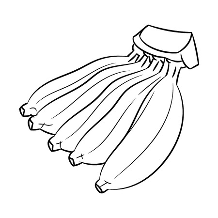 Hand drawn sketch of Cultivated Banana isolated, Black and White Cartoon Vector Illustration for Coloring Book - Line Drawn Vector Ilustração Vetorial
