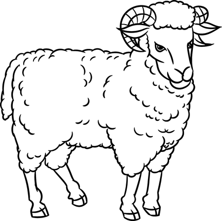 Hand drawing Sheep. farm animals set. Sketch graphic style.