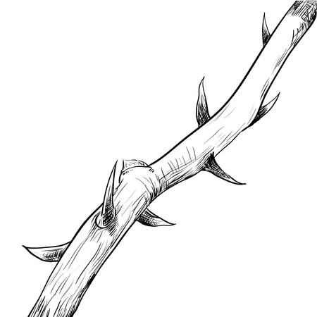 Hand drawing of Thorn. Black and White simple line Vector Illustration for Coloring Book - Line Drawn Vector Ilustrace