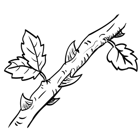 Hand drawing of Thorn. Black and White simple line Vector Illustration for Coloring Book - Line Drawn Vector Illustration