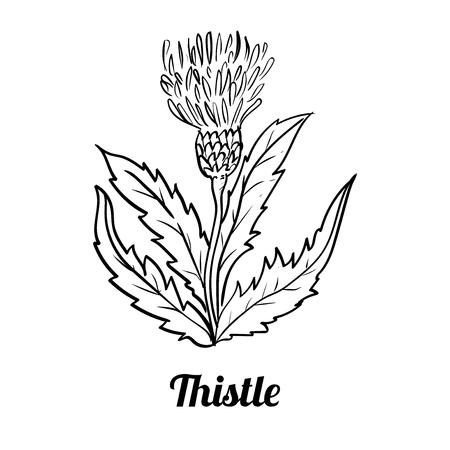 手描きのアザミは、白い背景で隔離の。黒と白のシンプルなラインぬり絵 - ライン描画ベクトルのベクトル図