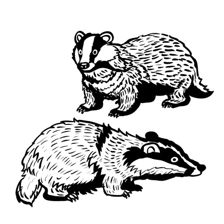 Hand drawing of two Badgers on white background. Black and White simple line Vector Illustration for Coloring Book - Line Drawn Vector Ilustracja