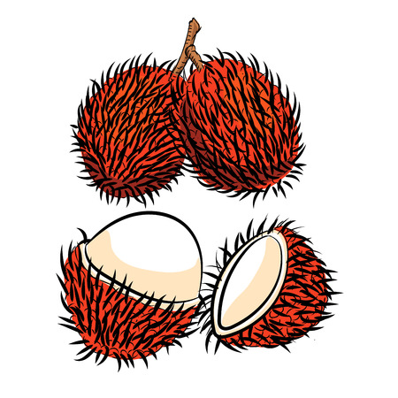Hand drawn sketch of Rambutan isolated, Black and White Cartoon Vector Illustration for Coloring Book - Line Drawn Vector Çizim