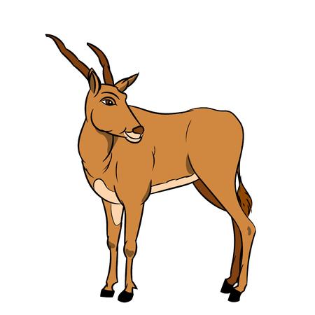 Illustration of impala isolated on white background, vector illustration. Illustration
