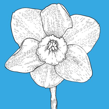 Drawing and sketch flower with black line-art on blue background. Design element. Can be used for cards, invitations, banners, posters, print design. Hand drawn Vector Illustration