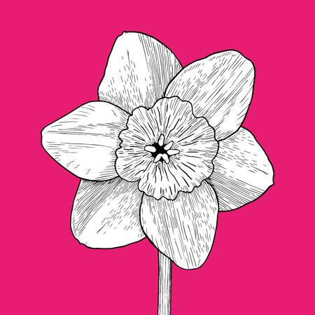 Drawing and sketch flower with black line-art on pink background. Design element. Can be used for cards, invitations, banners, posters, print design. Hand drawn Vector Illustration