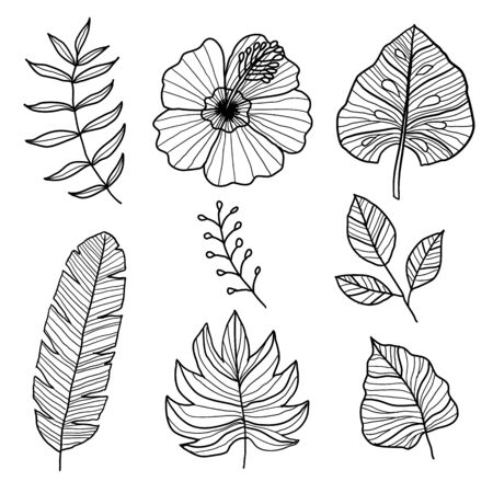 Set of Botanical Vector Elements, tropical leaves and flower on white background. Hand drawn style - Vector Ilustration