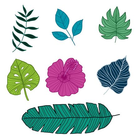 Set of Botanical Vector Elements, tropical leaves and flower on white background. Hand drawn style - Vector Illustration