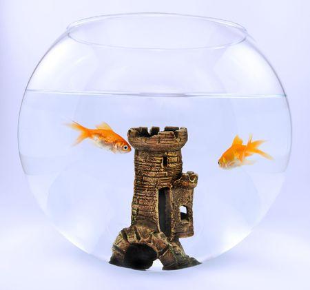 aquaria: Two gold fish in aquarium with castle