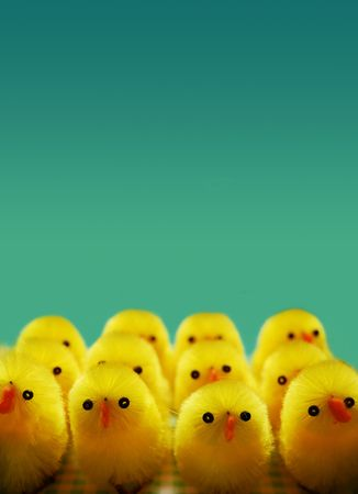 A line up of easter chicks Stock Photo - 801631