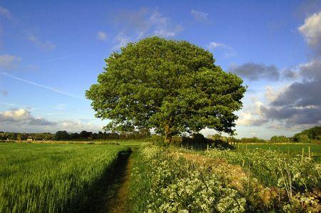 A single tree against a blue sky. Stock Photo - 942369