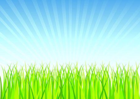 Fresh Spring Grass Vector illustration. illustration