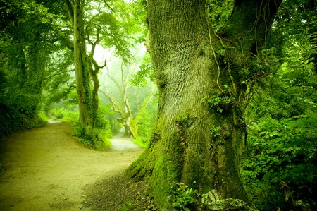 enchanted: A pathway leading into a forest.