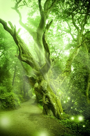 Enchanted Forest with ancient tree. Stock Photo