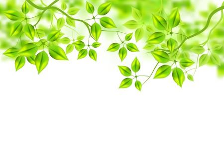 bladeren: Verse groene achtergrond laat in de zomer.  Stock Illustratie