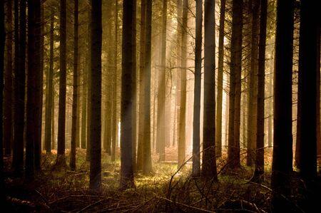 Warm sunbeams through a forest.