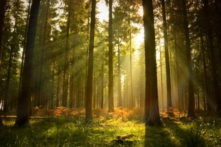foresta: Una bella foresta al crepuscolo. Archivio Fotografico