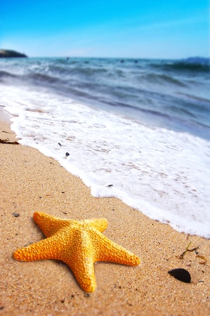 warm water fish: Starfish on a lonely beach. Summer holiday concept Stock Photo