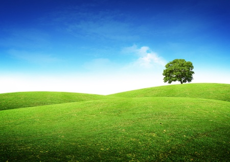 rolling hills: Green summer landscape scenic view.