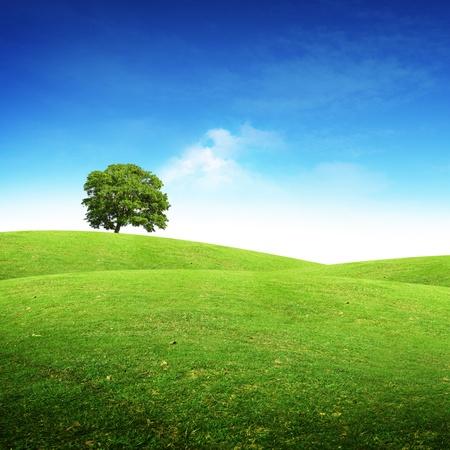 Grünen Sommer Landschaft szenische Ansicht. Standard-Bild