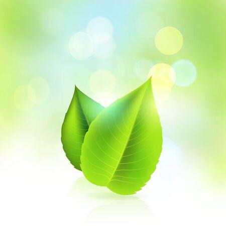 icono ecologico: Frescas y verdes hojas frescas hermosas - ilustraci�n vectorial Vectores