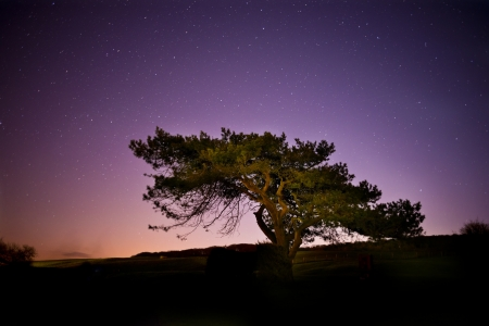 A tree set agains the night sky stars Stock Photo - 19479877