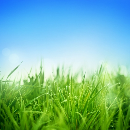 field and sky: Fresh grass lawn with dew drops  Stock Photo