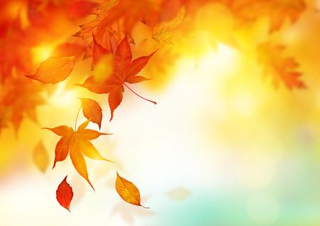 Autumn season falling Leaves  -  background design. Stock Photo