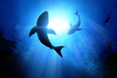 underwater life: Under the waves circle two great white sharks. Stock Photo