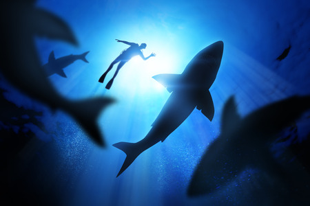 Bajo las olas de un buceador con grandes tiburones blancos.