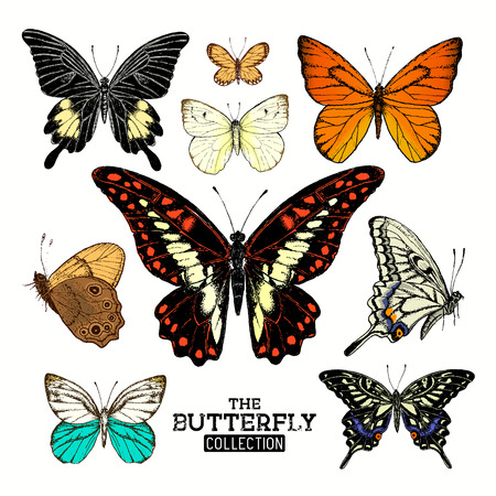 from side: Realistic Butterfly Collection. A set of butterflies, hand crafted vector illustration. Illustration