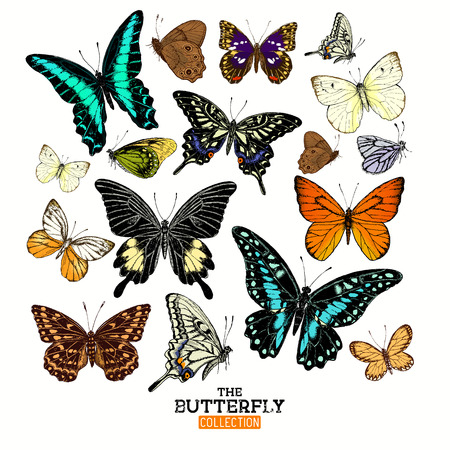 side view: Realistic Butterfly Collection. A set of butterflies, hand crafted vector illustration. Illustration