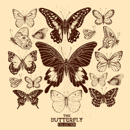 taxidermy: The Butterfly Collection. A collection of hand drawn butterflies, vintage set. Vector illustration.