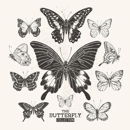 cobranza: La colección de la mariposa. Una colección de dibujado a mano mariposas, vintage set. Ilustración del vector. Vectores